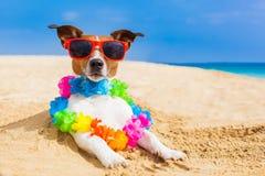 Hund am Strand Stockfoto
