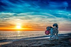 Hund am Strand lizenzfreies stockfoto