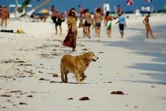 Hund am Strand Lizenzfreie Stockbilder