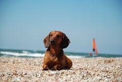Hund am Strand stockbild