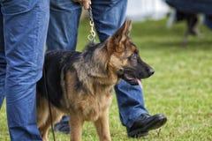 Hund- strid Arkivbilder