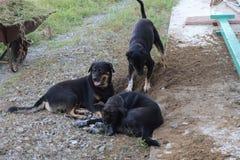 Hund, Team diging Stockbild