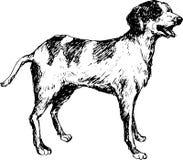 hund tecknad hand Arkivbild