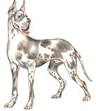 hund tecknad hand Royaltyfri Foto