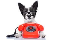 Hund am Telefon lizenzfreies stockfoto