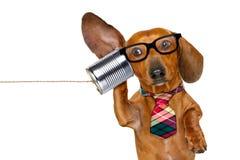 Hund am Telefon sorgfältig hörend stockfotografie
