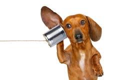 Hund am Telefon sorgfältig hörend stockbilder