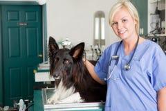 Hund am Tierarzt Stockbild