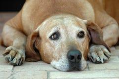 Hund traurig Stockfotos