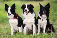 hund tre arkivbilder