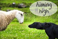 Hund trifft Schafe, Text Aming-Hoch stockbild