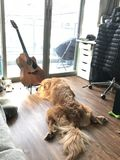 Hund u. Gitarre lizenzfreie stockfotografie