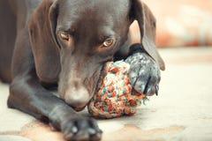Hund und Ball stockfotos