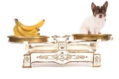 Hund und Banane lizenzfreie stockfotografie