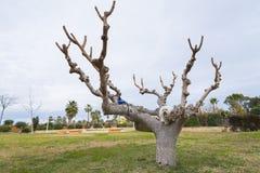 Hund und Baum stockfotografie