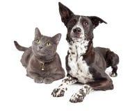 Hund und Cat Laying Looking Up Lizenzfreies Stockfoto