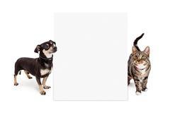 Hund und Cat Looking Up am hohen leeren Zeichen Stockbilder