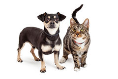 Hund und Cat Standing Looking Up Together Stockfoto