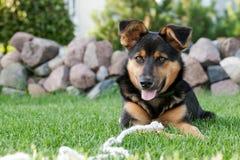 Hund und das Seil lizenzfreie stockfotos