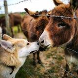 Hund und Esel Lizenzfreie Stockfotografie