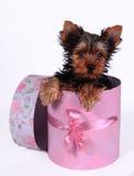Hund und Geschenkbox Stockfotos