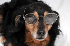 Hund und Gläser Stockfotografie