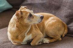 Hund und ihr Alter Lizenzfreie Stockfotos