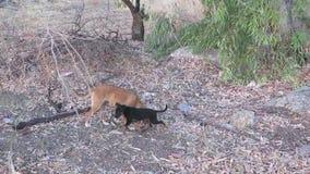 Hund und ihre Welpen stock video