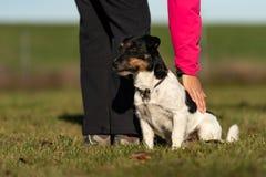 Hund und Inhaber Sport mit einem ergebenen Steckfassungsrussell-Terrier stockbild
