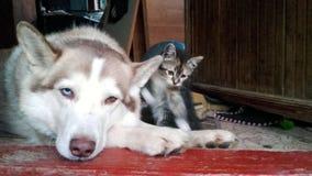 Hund und Kätzchen Stockbilder