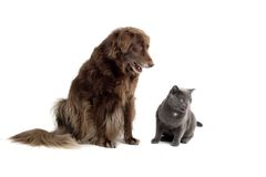 Hund und Katze Stockfoto