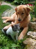 Hund und Katze Lizenzfreies Stockfoto