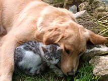 Hund und Katze Lizenzfreies Stockbild