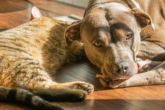 Hund und Katze, die ein Sonnenbad nehmen Stockbilder