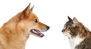 Hund und Katze, die einander betrachten Lizenzfreies Stockfoto