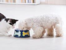 Hund und Katze, die von einer Schüssel essen lizenzfreie stockbilder