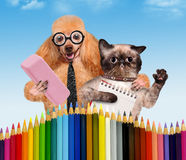 Hund und Katze mit Schulbedarf Stockfotografie