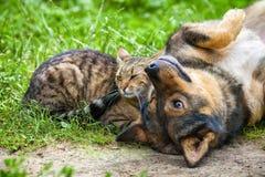 Hund und Katze sind beste Freunde Stockfotos