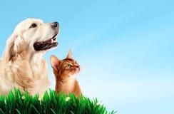 Hund und Katze zusammen auf Gras, Frühlingskonzept Lizenzfreies Stockbild