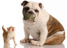 Hund und Katzekampf Stockfoto