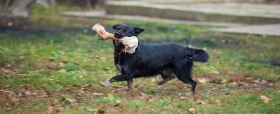 Hund und Knochen Stockfoto