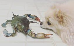 Hund und Krabbe 2 Stockfoto