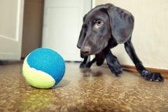 Hund und Kugel lizenzfreies stockbild