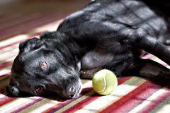 Hund und Kugel Stockfoto