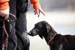 Hund und Kursleiter lizenzfreies stockfoto