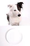 Hund und leere Platte lizenzfreie stockbilder