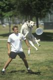 Hund und Mann, die Frisbee im Hunde- Frisbee-Wettbewerb, Westwood, Los Angeles, CA spielen Stockbilder