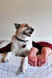 Hund und Mann im Bett Stockfotos