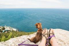 Hund und Meer Stockfotografie