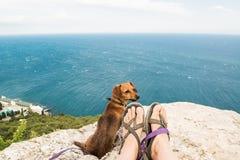 Hund und Meer Lizenzfreies Stockfoto